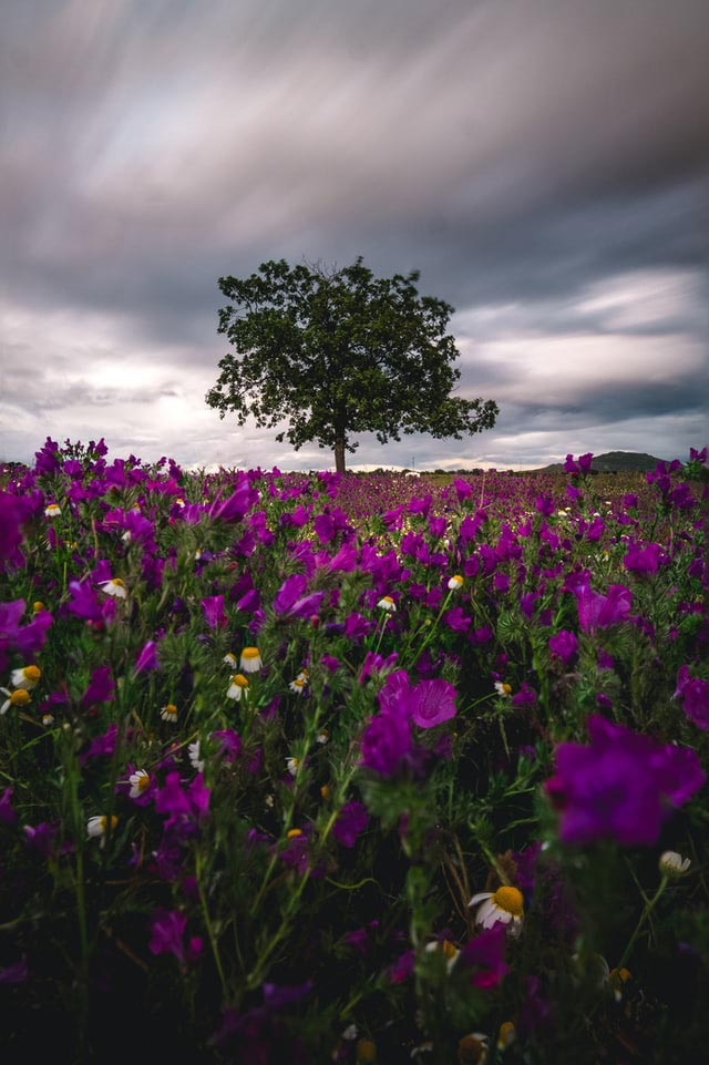Field of wildflowers with a looming storm